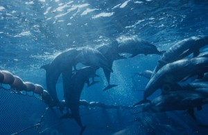 dolphin-in-net