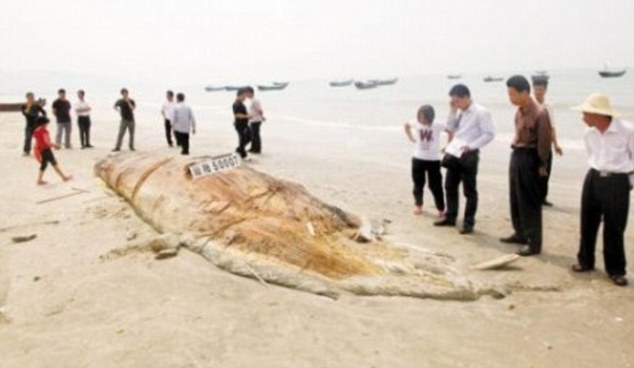 'Sea Monster' Found on Beach in China   The ocean update