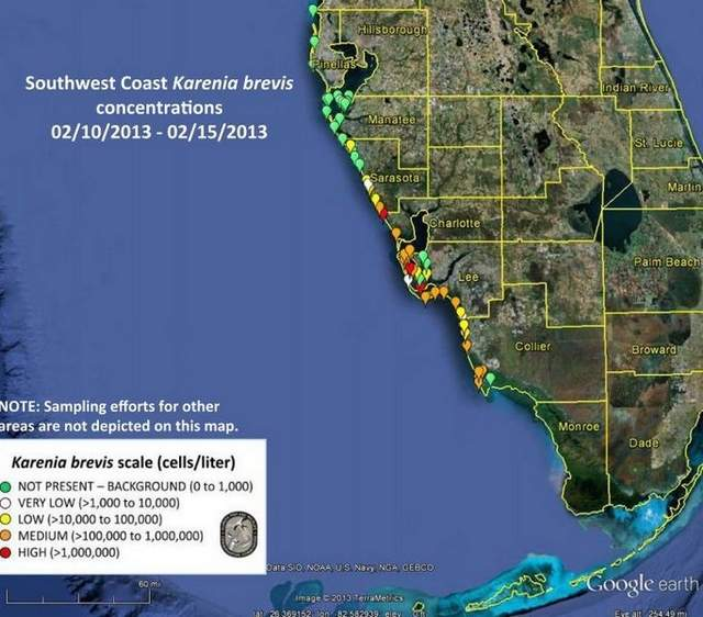 Red Tide Levels Drop Off Across Southwest Florida Coast Usa The