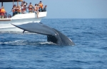 blue-whale-tail-Sri-Lanka