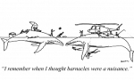 whales-harrasment
