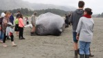 Word of mouth spread fast, inspiring hundreds of people to make the trip out on Rototai Beach to see and touch three sperm whales that stranded on the shallow tidal flats on Saturday night. Charlotte Squire