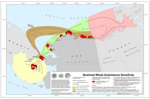 Bowhead_Whale_Subsistence_Sensitivity
