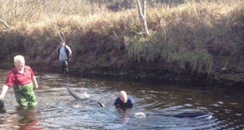 Minke-whale-Ireland-3