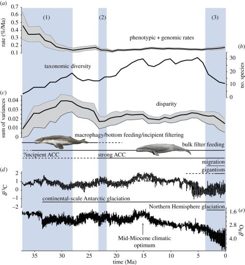 Major events in mysticete evolution driven by palaeoenvironmental change.
