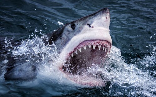 If you look closely, you can spot this shark's ampullae of Lorenzini (BBC)