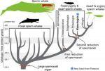 arbol-genealogico-cachalote