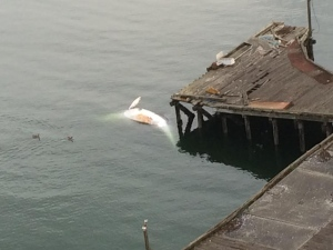 The carcass could be seen from buildings in downtown Vancouver that overlook Burrard Inlet. (CBC)