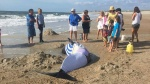 Beached-whale-in-Fernandina