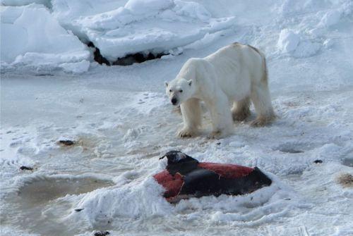 Image : Jon Aars/Norwegian Polar Institute