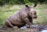 How long before the rhino joins the list ? Gerry Zambonini, CC BY-SA