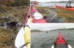 Dolphin-Rescue-kayak