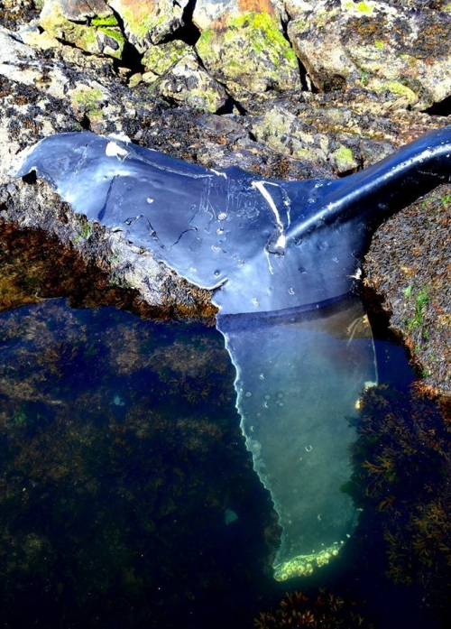 whales-are-dying-off-north-americas-west-coast-and-scientists-have-no-clue-why-body