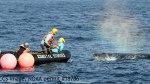 rescue-whale-Cap-cod