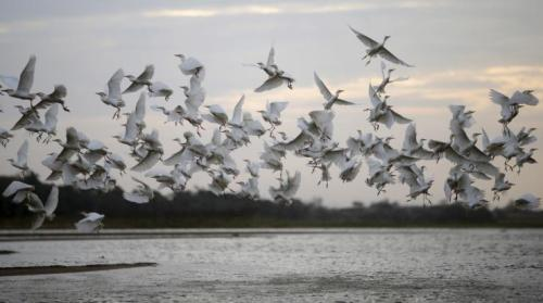 Birds fly over the Rio Doce river in Brazil, Nov. 19, 2015. Toxic sludge has reached the Atlantic Ocean.Reuters