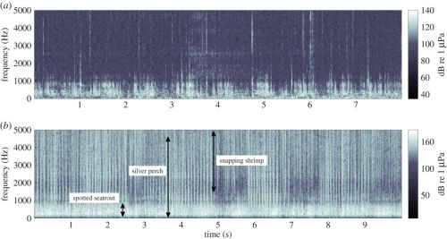 Spectrograms showing ambient noise for midnight August 15 (a) 2005 (severe HAB) and (b) 2006 (no severe HAB), 0–5000 Hz to show detail of fish sound. Approximate bandwidth of sounds from snapping shrimp, silver perch and spotted seatrout shown on 2006 spectrogram. Note some spotted seatrout and snapping shrimp present in 2005. Spectrograms are 512 point with a 50% overlap Hamming window.