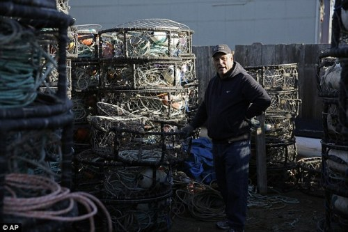 The crab fishery has begun working closely with state and federal agencies and environmental groups . Pictured: crab fisherman Jim Anderson