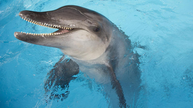 Another dolphin stolen : rescued dolphin moved from SeaWorld to