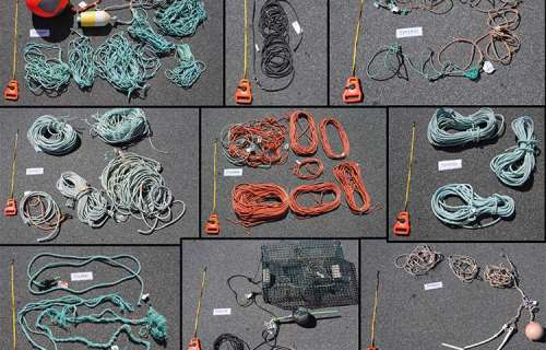 Above are some of the sets of gear tested: overall, five sets that included floats or buoys, one that included a two-brick lobster trap and 10 that were line only. Credit: Julie van der Hoop, Woods Hole Oceanographic Institution.
