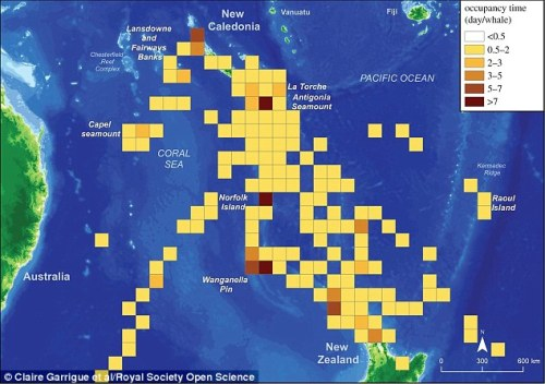 The researchers found the whales were spending up to 22 days in areas around two seamounts called La Torch and Antigonia, while they tended to only stay fleetingly in other parts of the ocean (illustrated)