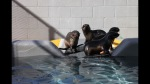 Pipester, the rescued seal pup, appears on the far left.