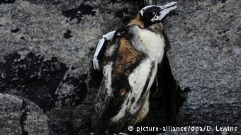 Scientists reported finding frozen penguin carcasses during their expedition