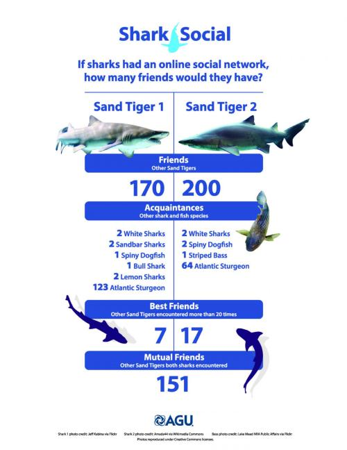 If sharks had an online social network, what would it look like? Credit: American Geophysical Union