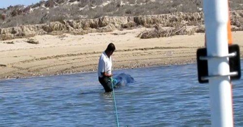Rescatan-ballena-varada-Laguna-Mexico2