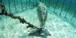 dugong-cage-2