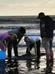 Rescuers help the whale that was stranded at Boobyalla Beach. Picture: TASMANIA POLICE