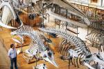 bones-whale