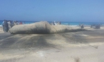 whale-Egypt