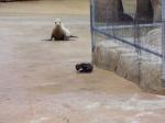 Seal2-Omaha-zoo-USA