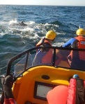 Photo Supplied, SA Whale Disentanglement Network