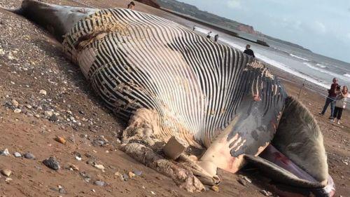 fin-whale-devon-uk2