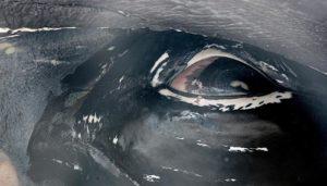 Photo courtesy Seaside Aquarium