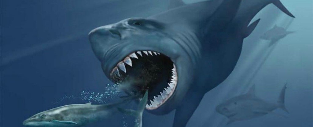 3441d5183 Researchers might have figured out why the world s largest shark went  extinct