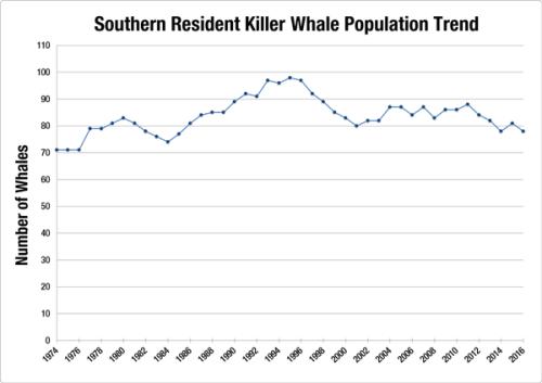 pop-trend-killer-whales-resident-pod